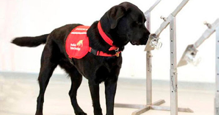 Reino Unido entrenará perros para detectar Coronavirus