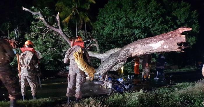 Enfermero muere tras caerle un árbol en Sonsonate