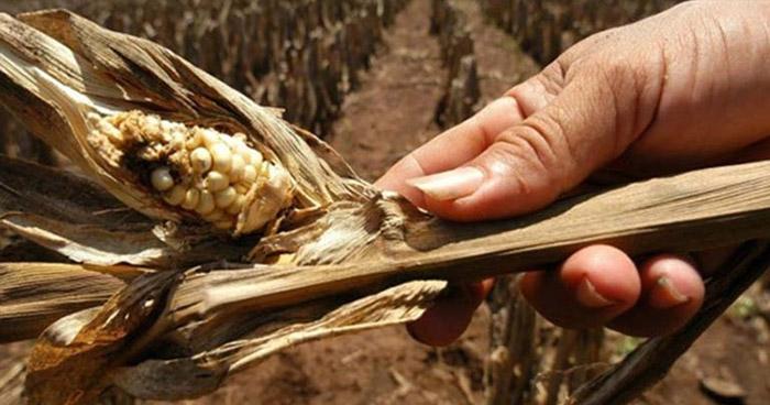 MARN: Sequía severa afecta a los departamentos del oriente del país