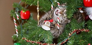pets who ruined christmas are often cats in tree