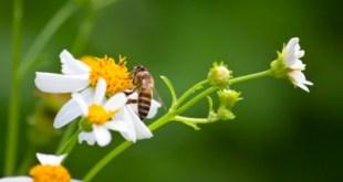 Cómo sobrevivir a la alergia al polen