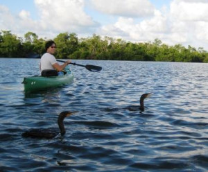 Fishing Cormorants during Paddle with Tarpon Bay Explorers