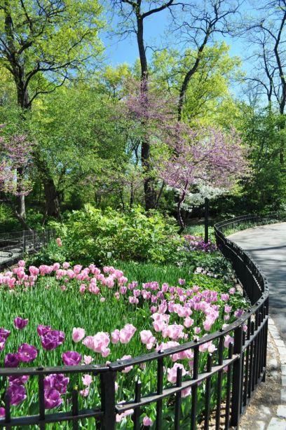 Spring Flowers in Central Park, April 17, 2012