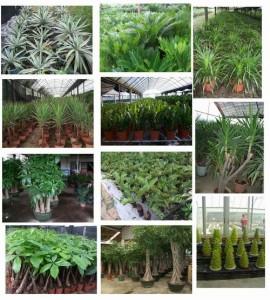 Ecotips – Coloca Plantas Para Purificar El Aire
