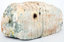 Solution Ozone About Ozone Effect Pathogens Bread Mold Image