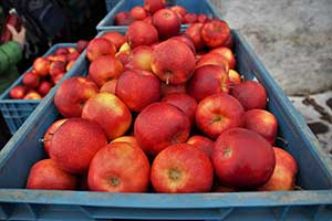 ozone disinfect food storage ozono desinfeta armazenamento comida