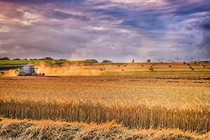 farming ozone ozono plantação
