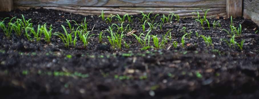 ozone horticulture ozono horticultura