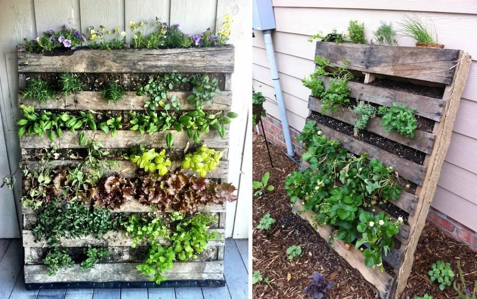 Come creare un orto verticale con i pallet soluzioni di casa for Come creare i propri progetti di casa