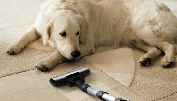 Animali domestici e pulizie in casa tutti i consigli