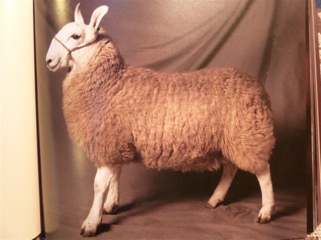 Beautiful Sheep Book Solva Woollen Mill