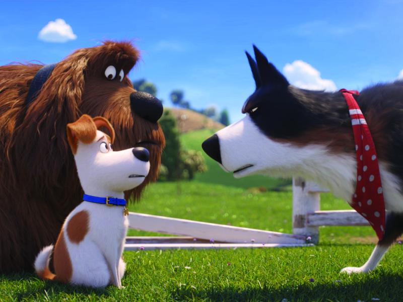 Duke (Eric Stonestreet), Max (Patton Oswalt) and Rooster (Harrison Ford) in Illumination's The Secret Life of Pets 2