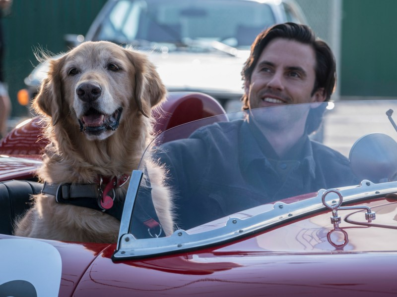 "L-R: ""Enzo"" and Milo Ventimiglia in Twentieth Century Fox's THE ART OF RACING IN THE RAIN"