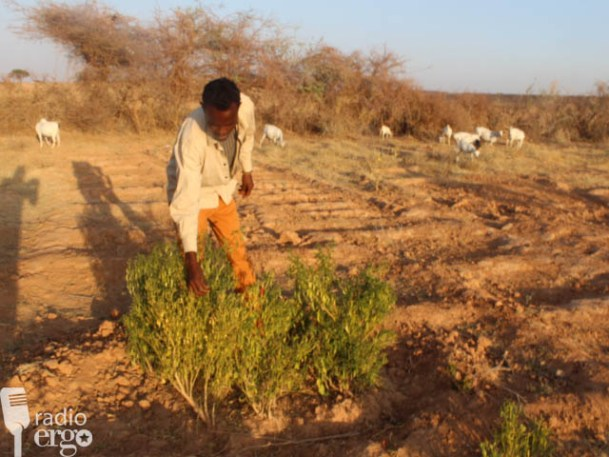 Somaliland: Bailing Out Dependants of Locusts Infested Farms in Awdal Region