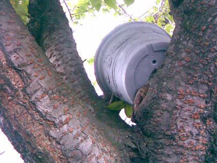 fleurs-de-pigeon-1.jpg
