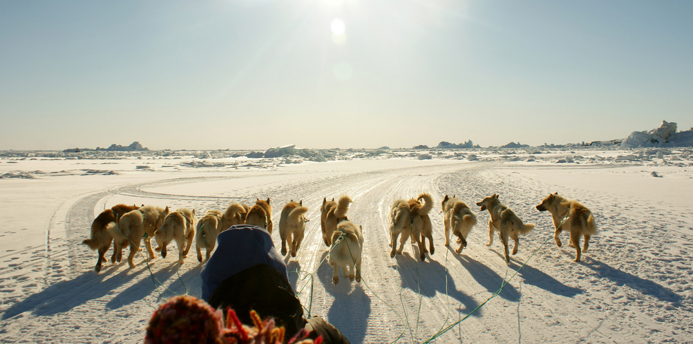 Dog sledging in Greenland. Photo by Ramon Stoppelenburg.