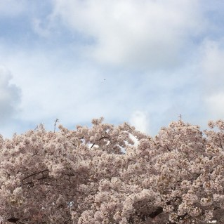 Blossom 1 by Some small stories