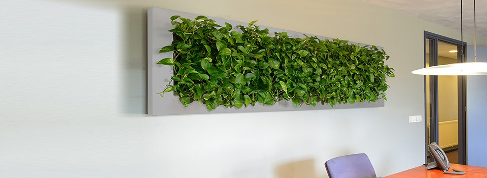 Unique Hanging Planters