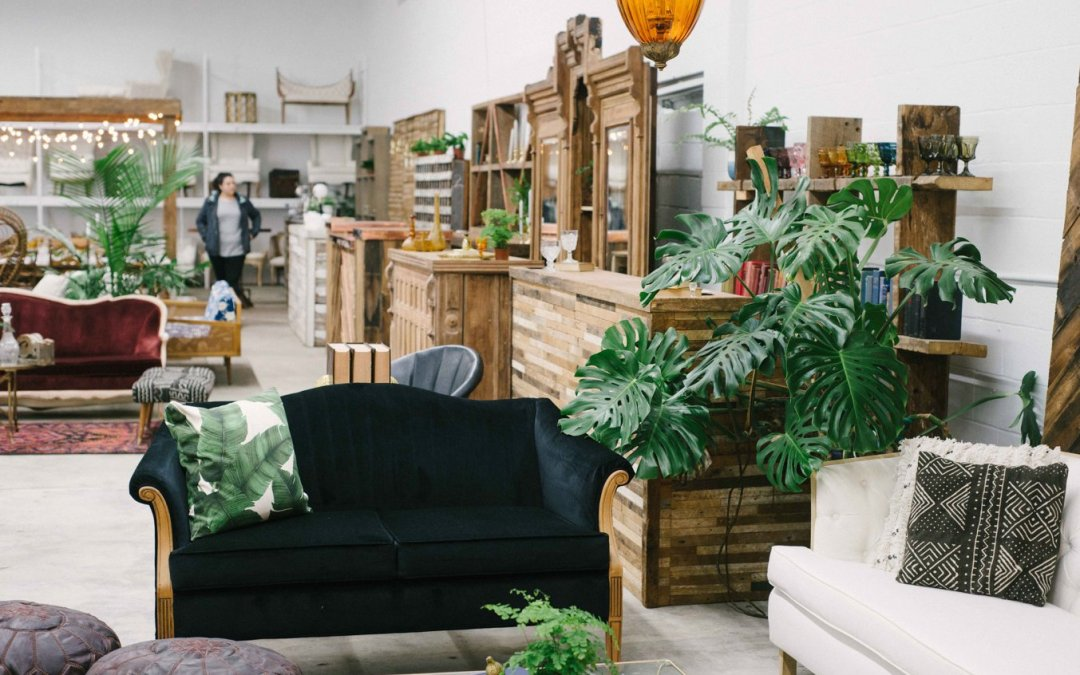 We've got the Plants!!! || Something Vintage Rentals x Modern Foliage