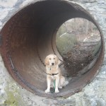 Tue Cute Tuesday – Conquering the Big Tunnel