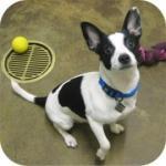 Wordless Wednesday – Meet Adoptable Franky!