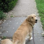 The Puppiness Project – You'll Feel Better After a Walk