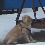 How Do You Teach a Dog to Sail – A Plea for Help