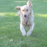 Tue Cute Tuesday – You Could Fly With Those Ears!