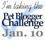 Pet blogger Challenge January 10