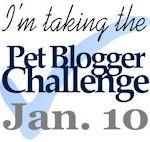 Pet Blogger Super Heroes – Pet Blogger's Challenge 2015