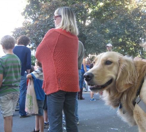 Golden Retriever at Ithaca Festival Parade