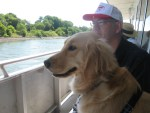 Golden Retriever takes a boat ride