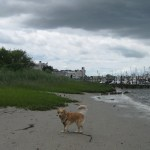 Wacky Pet Products: Dog Walking Coat?