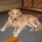 3 Ways I'd Really Change Dog Adoptions