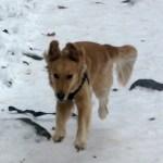 The Agility Dog Who Makes Everyone Smile