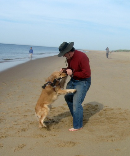 Honey the Golden Retriever plays tug on the beach with her person.