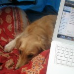 My Dog Loves And Hates Her Blog