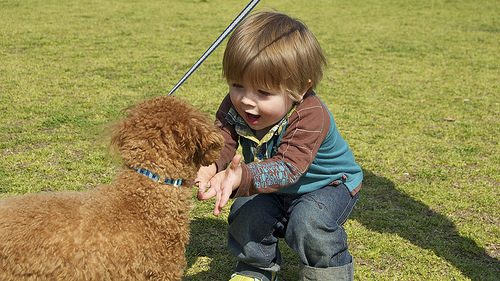 Little boy meets a dog at the park.