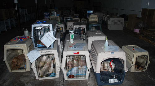 These dogs were seized from a puppy mill and are on their way to a better life.