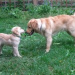 Listen Carefully To Anyone Different From You – Good for the Dog; Good for You
