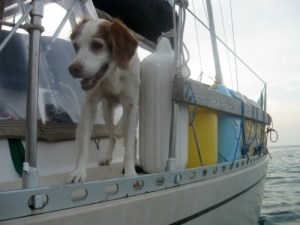 Loki is a dog cruising on the sailboat Infinity.