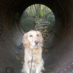 There's Gold at the End of the Tunnel – Wordless Wednesday