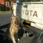 Honey Sniffs Out Truck Nuts in Ithaca? – Wordless Wednesday
