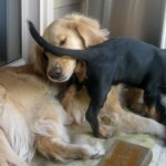 7 Things You CAN Say To Your Dog That Won't Hurt Her Feelings