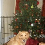 The Dog-Friendly Christmas Makeover
