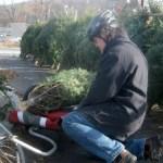 Christmas Safari Scandal – Wordless Wednesday (?)