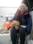 Honey the Golden Retriever is training new sailing skills.