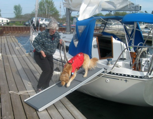 Honey the golden retriever at Treasure Island marina.