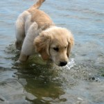 What My Golden Retriever Taught Me About Who I Really Am