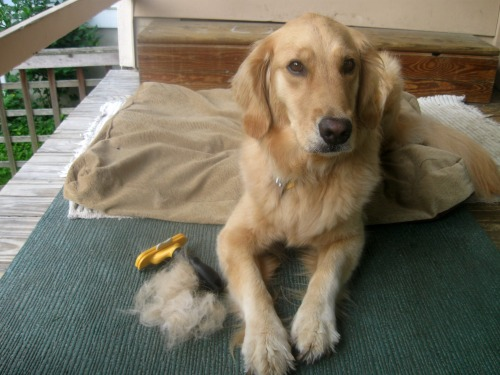 Dog Hair Is Expensive Something Wagging This Way Comes